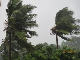 Cyclone Vardah Trees In The Wind