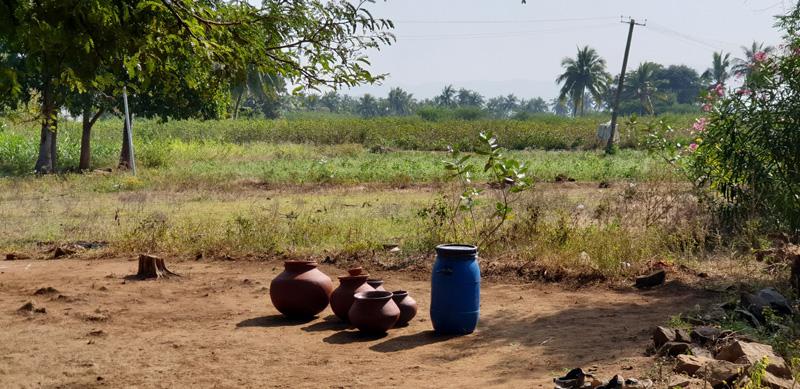 village-pongal