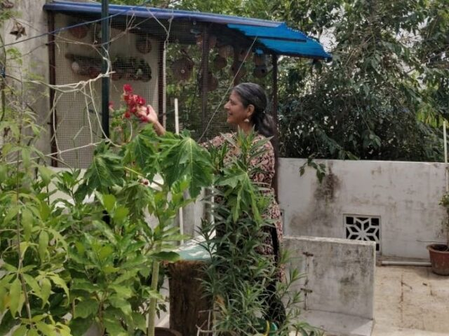 Kalavathy Terrace Garden