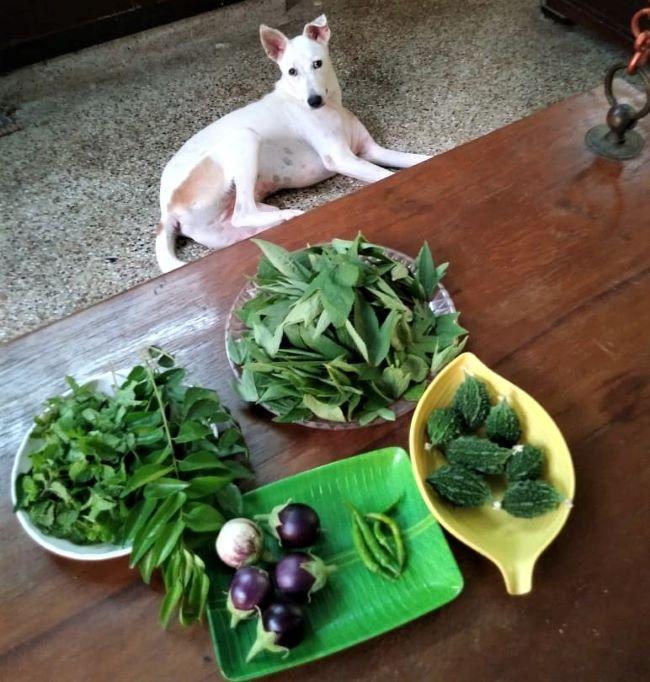 vegetable yields
