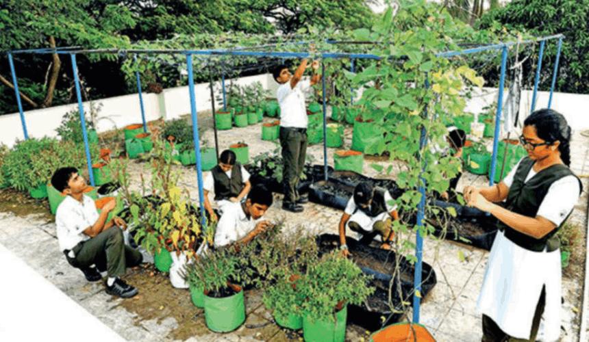 school terrace garden