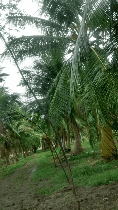 coconut grove madukkur