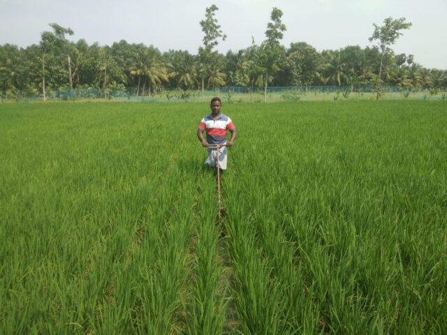 Vidhyasagar in his fields