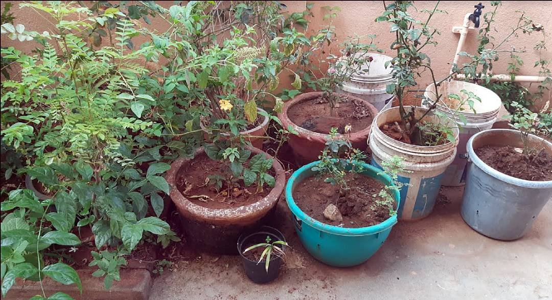 terrace garden of Anya