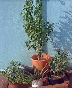 terrace garden of Bhuvana