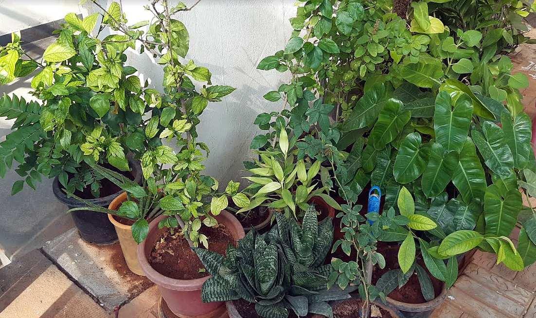 terrace gardenof Thanushri