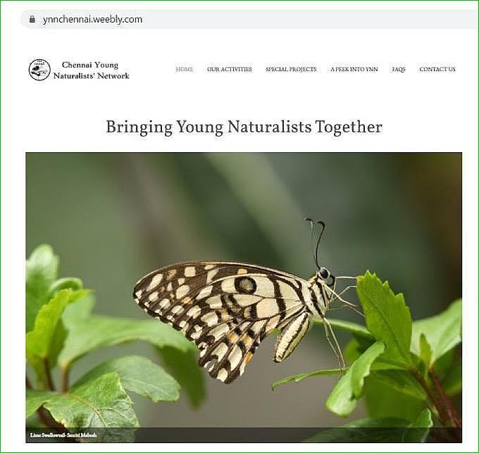 YNN Website